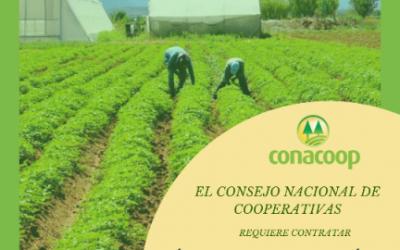 Conacoop busca Técnico para el Sector Agrícola